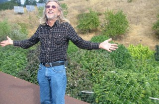 El cannabis d'extérieur avec Jorge Cervantes