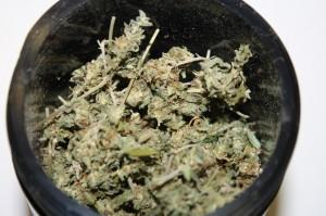 Marijuana dans le Hash Maker