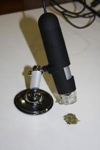 Utilisation du microscope USB pour observer une fleur de cannabis