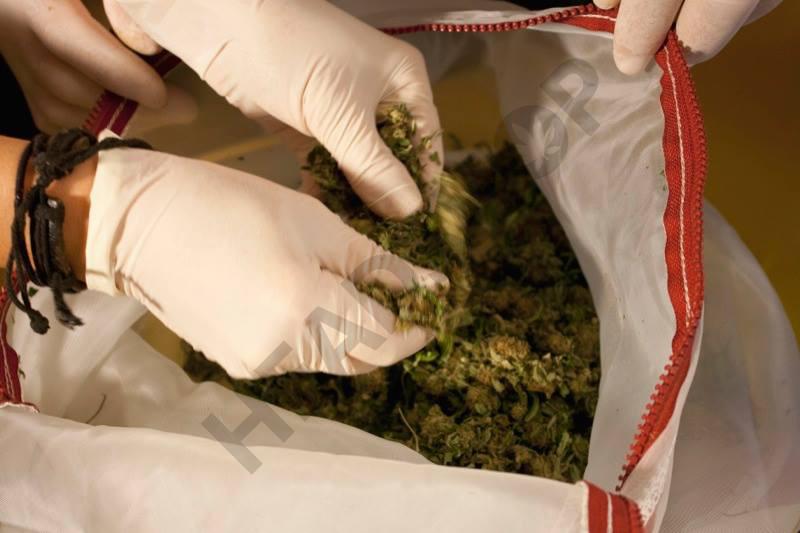 Remplir le sac pyramidal avec le cannabis