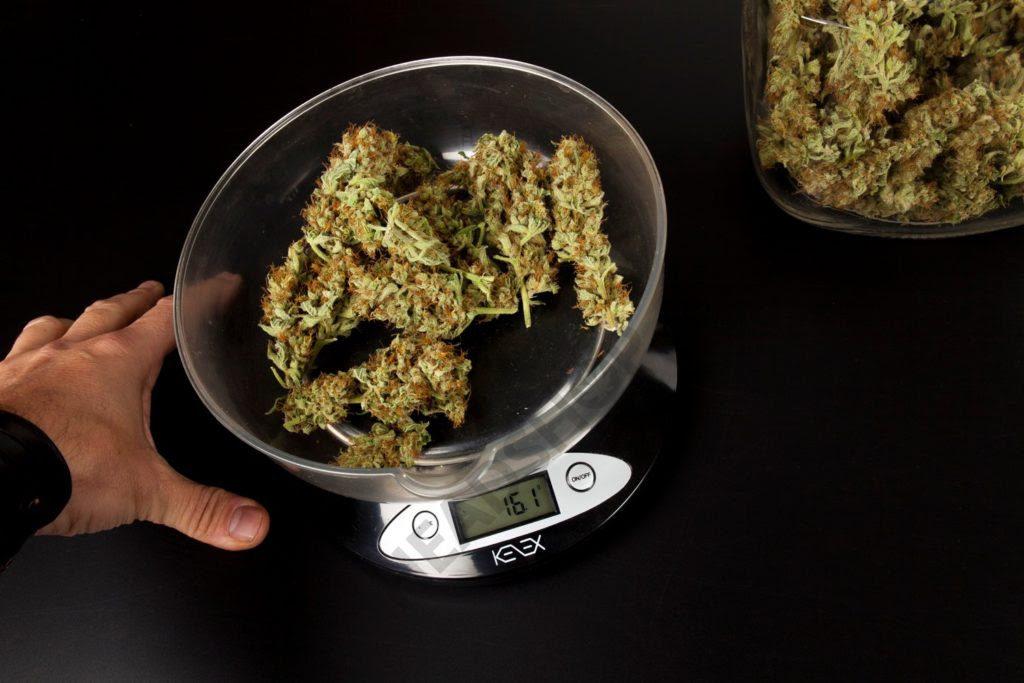 Balance Kenex Counter qui mesure le poids de plusieurs têtes de cannabis